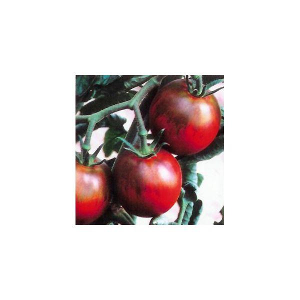 Tomate noire de crim e jean paul le jardinier - Noir de crimee ...