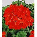 Engrais Florol rouge  1 kg